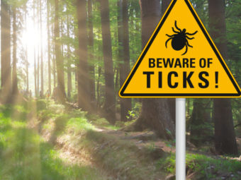 What Does A Tick Bite Look Like On A Child And How To Remove It?